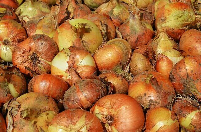 bunch of onions with skin recipe cote d'azur