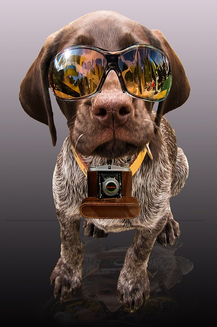 safety dog with glasses and camera around neck