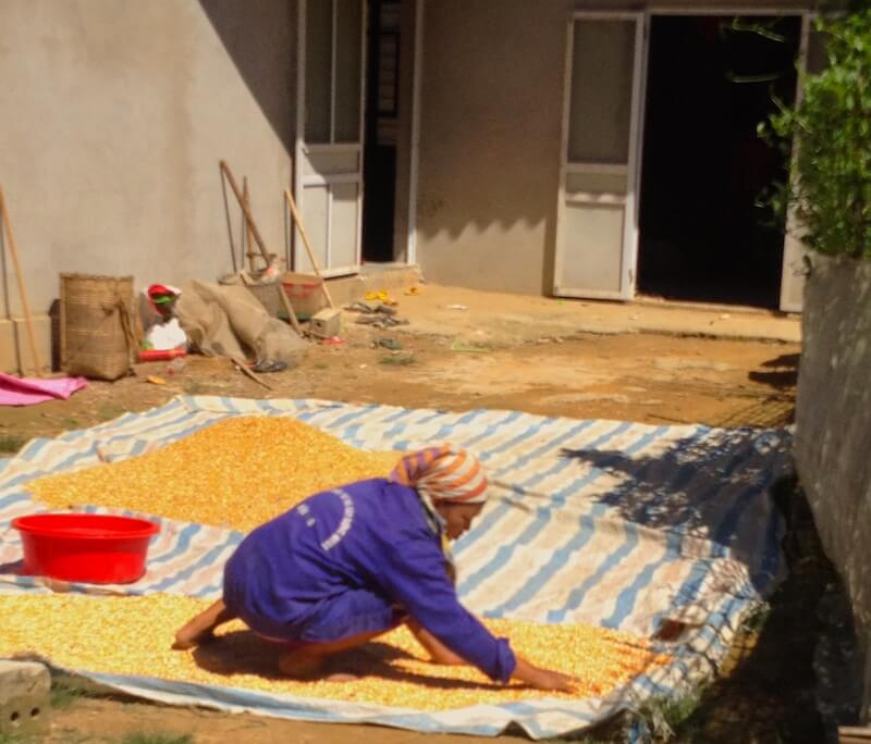 mai chau woman working with dry corn