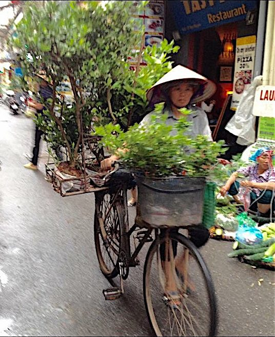 woman with plants in bicycle hanoi