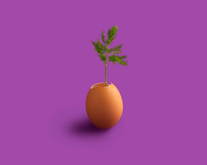 eggshell with plant purple background simple living