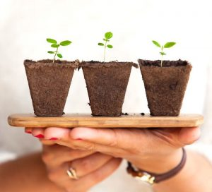 3 small baby plants on a board simple living