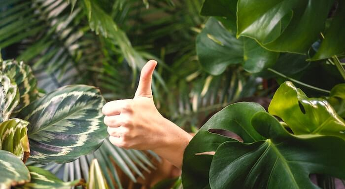 thumbs up in green plants living simply