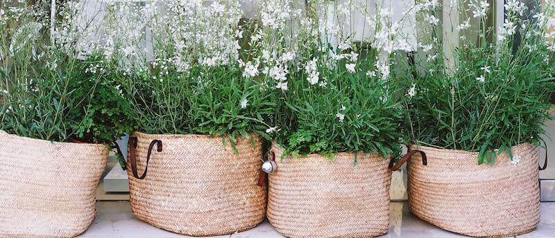 straw plant holders with green
