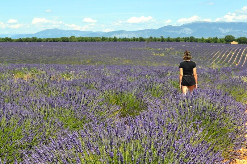 girl in lavender field small house